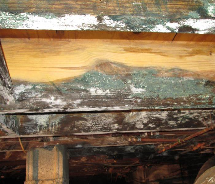 Mold in Crawlspace