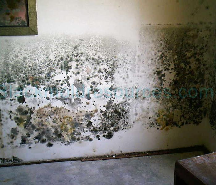 Mold Remediation Mold Damage Emergency Tips